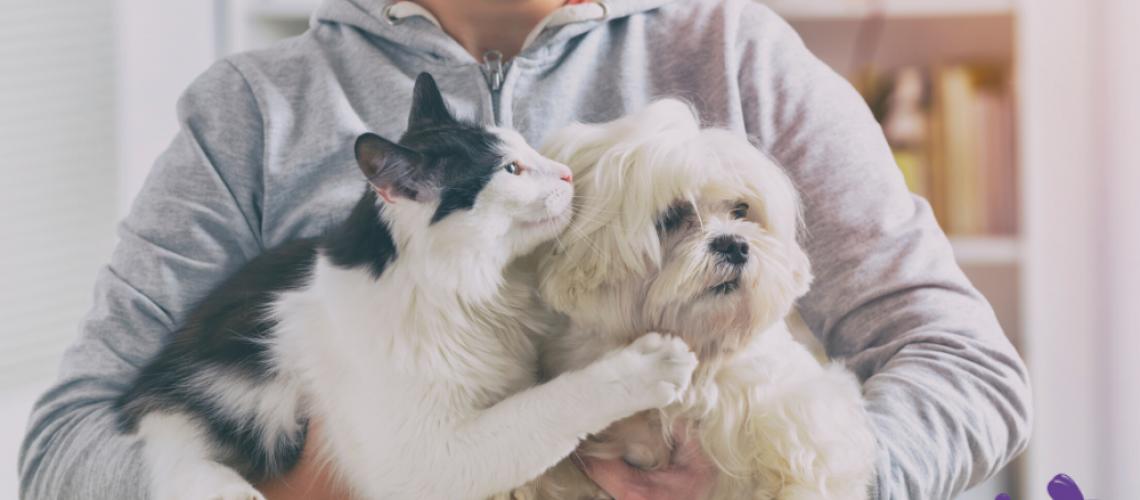 Ansiedad de mascotas en cuarentena